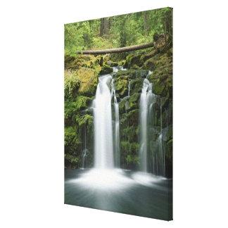 USA, Oregon, Cascade Range, Umpqua National Stretched Canvas Print