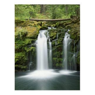 USA, Oregon, Cascade Range, Umpqua National Post Cards