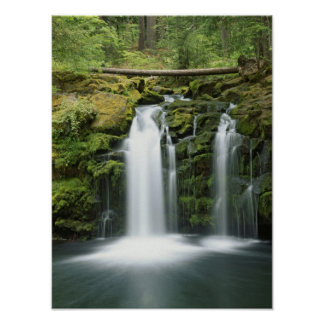 USA, Oregon, Cascade Range, Umpqua National Poster