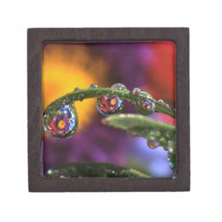 USA, Oregon, Close-up abstract of purple Premium Keepsake Box