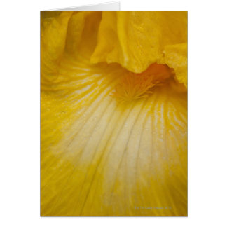 USA, Oregon, Close-up of yellow iris Card