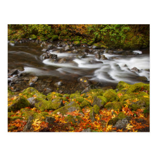 USA, Oregon, Columbia River Gorge, Tanner Creek 2 Postcard