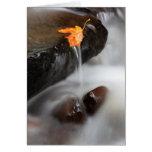 USA, Oregon, Columbia River Gorge, Tanner Creek 3 Card