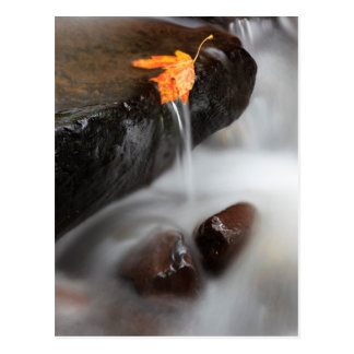 USA, Oregon, Columbia River Gorge, Tanner Creek 3 Postcard
