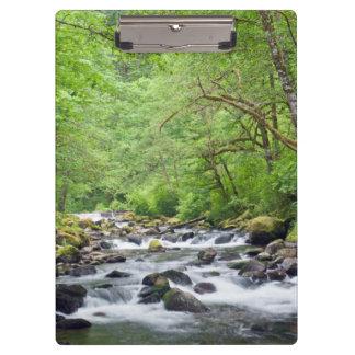 USA, Oregon, Columbia River Gorge, Tanner Creek 4 Clipboard