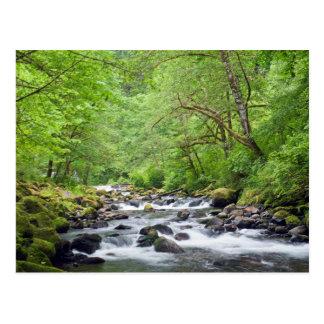 USA, Oregon, Columbia River Gorge, Tanner Creek 4 Postcard