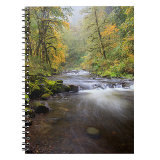 USA, Oregon, Columbia River Gorge, Tanner Creek Notebook
