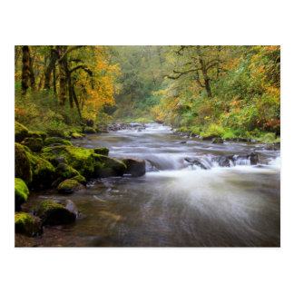 USA, Oregon, Columbia River Gorge, Tanner Creek Postcard