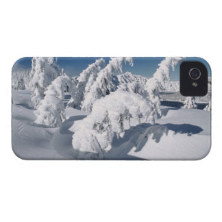 USA, Oregon, Crater Lake NP. Trees droop under a iPhone 4 Case