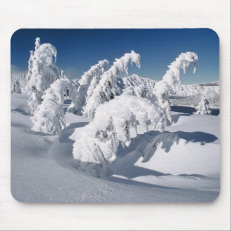 USA, Oregon, Crater Lake NP. Trees droop under a Mouse Pad