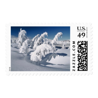 USA, Oregon, Crater Lake NP. Trees droop under a Postage Stamps