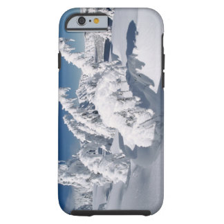 USA, Oregon, Crater Lake NP. Trees droop under a Tough iPhone 6 Case
