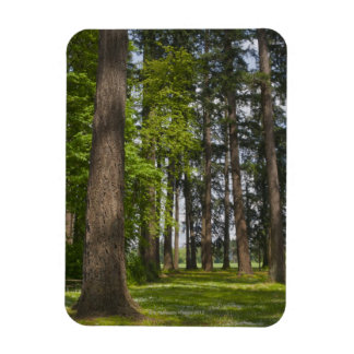 USA, Oregon, Fir trees forest Rectangular Photo Magnet