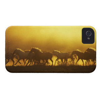 USA, Oregon, Harney County, Wild Kiger mustangs Case-Mate iPhone 4 Cases