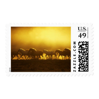 USA, Oregon, Harney County, Wild Kiger mustangs Postage Stamp