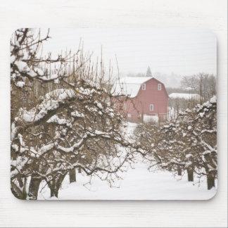 USA, Oregon, Hood River. Snow covered Apple Mouse Pad