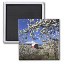 USA, Oregon, Hood River Valley, Pear orchard Magnet