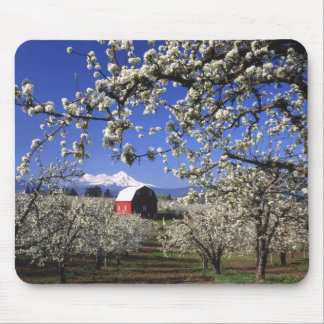 USA, Oregon, Hood River Valley, Pear orchard Mouse Pad