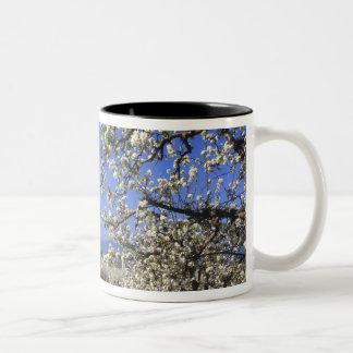 USA, Oregon, Hood River Valley, Pear orchard Two-Tone Coffee Mug