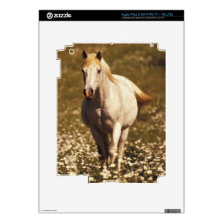USA, Oregon. Horse in a field of daisies Decals For iPad 3