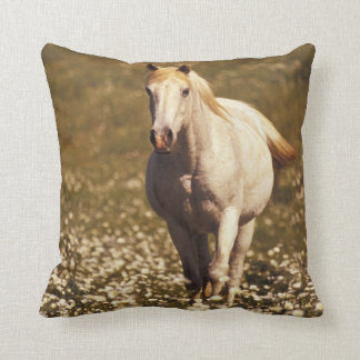 USA, Oregon. Horse in a field of daisies Throw Pillow