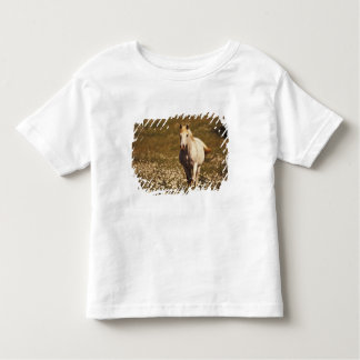 USA, Oregon. Horse in a field of daisies Toddler T-shirt