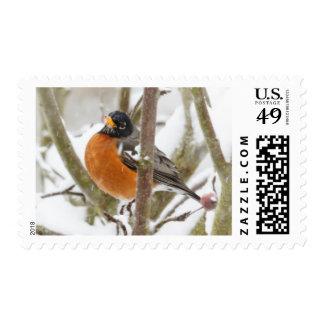USA, Oregon, Keizer, American Robin Postage