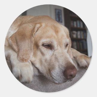 USA, Oregon, Keizer, Labrador Retriever Resting Classic Round Sticker