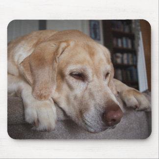 USA, Oregon, Keizer, Labrador Retriever Resting Mouse Pad