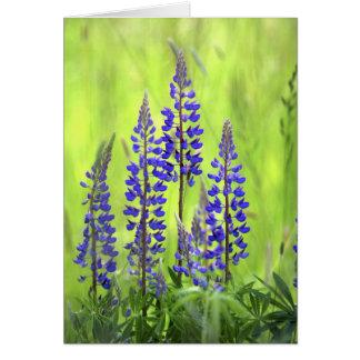 USA, Oregon, Mt. Hood National Forest, Lupine Greeting Card