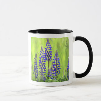 USA, Oregon, Mt. Hood National Forest, Lupine Mug
