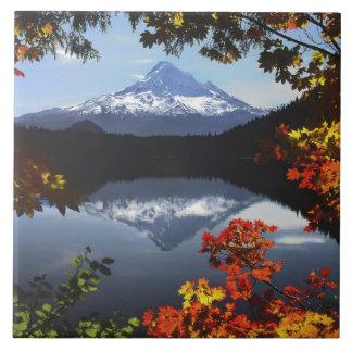 USA, Oregon, Mt. Hood National Forest. Tile