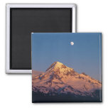 USA, Oregon, Mt Hood. Sunset creates alpenglow 2 Inch Square Magnet