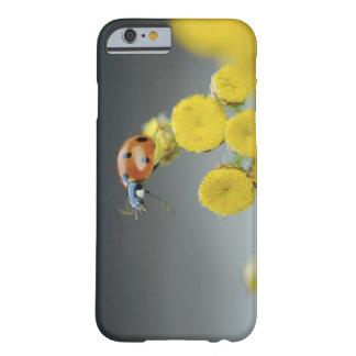 USA, Oregon, Multnomah County. Ladybug on yellow Barely There iPhone 6 Case