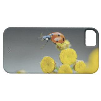 USA, Oregon, Multnomah County. Ladybug on yellow iPhone SE/5/5s Case