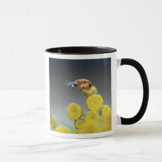 USA, Oregon, Multnomah County. Ladybug on yellow Mug