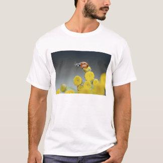USA, Oregon, Multnomah County. Ladybug on yellow T-Shirt