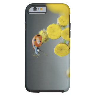 USA, Oregon, Multnomah County. Ladybug on yellow Tough iPhone 6 Case