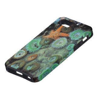 USA, Oregon, Nepture SP. An orange starfish is iPhone 5 Cover