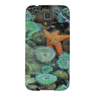USA, Oregon, Nepture SP. An orange starfish is Case For Galaxy S5
