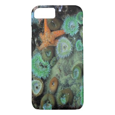 USA Themed USA, Oregon, Nepture SP. An orange starfish is iPhone 7 Case