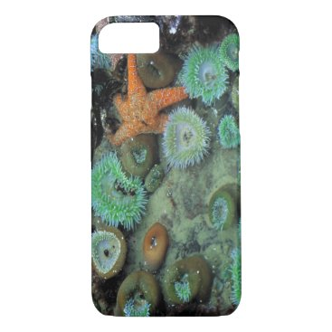 USA Themed USA, Oregon, Nepture SP. An orange starfish is iPhone 8/7 Case