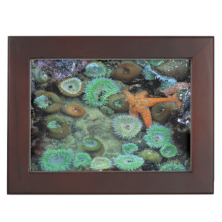 USA, Oregon, Nepture SP. An orange starfish is Keepsake Box