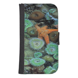 USA, Oregon, Nepture SP. An orange starfish is Phone Wallet