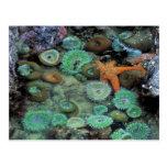 USA, Oregon, Nepture SP. An orange starfish is Postcards
