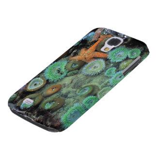 USA, Oregon, Nepture SP. An orange starfish is Samsung S4 Case