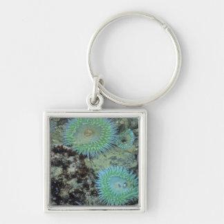 USA, Oregon, Nepture SP. Jewel-toned sea Keychain