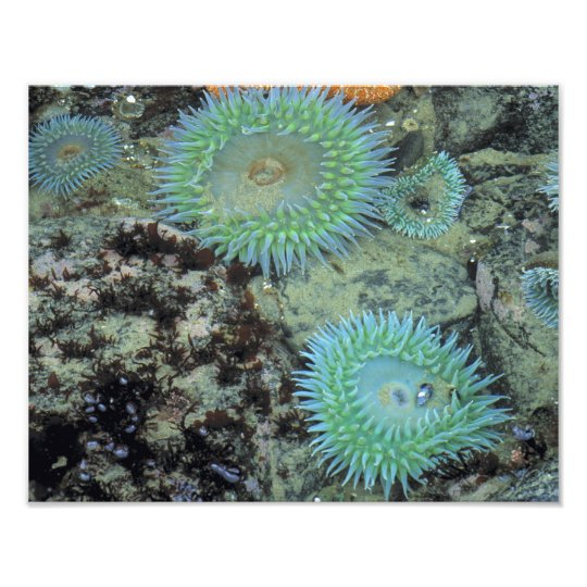 USA, Oregon, Nepture SP. Jewel-toned sea Photo Print