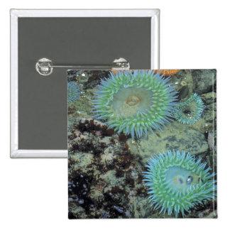 USA, Oregon, Nepture SP. Jewel-toned sea Pinback Button