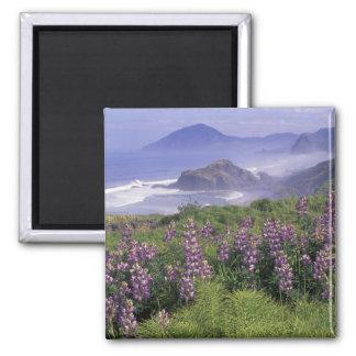 USA, Oregon, Nesika Beach. Lupine and Oregon 2 Inch Square Magnet